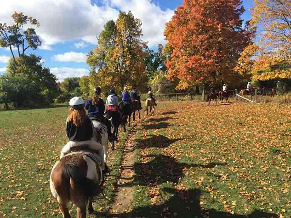 Horseback riding lessons mississauga