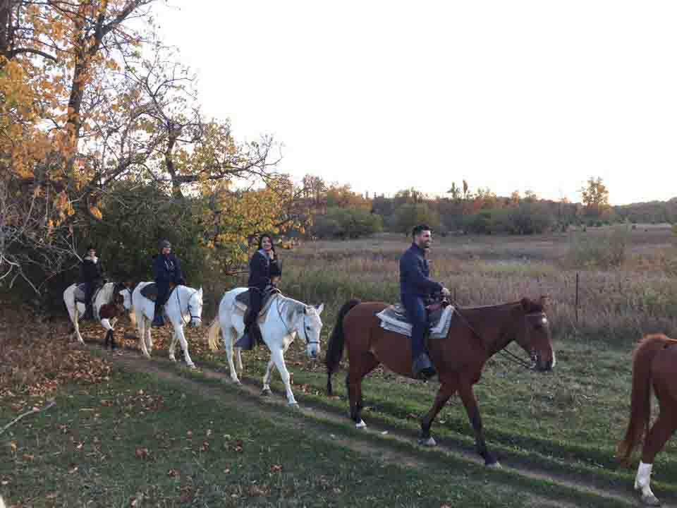 Horseback Riding Lessons Mississauga Horseback Riding